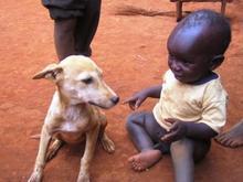 ダウディと子犬
